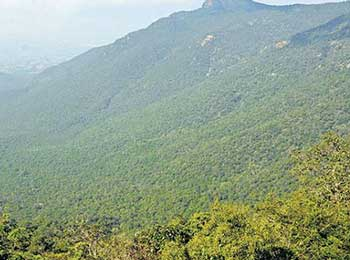 Nabard launches tribal project in Pachamalai hills
